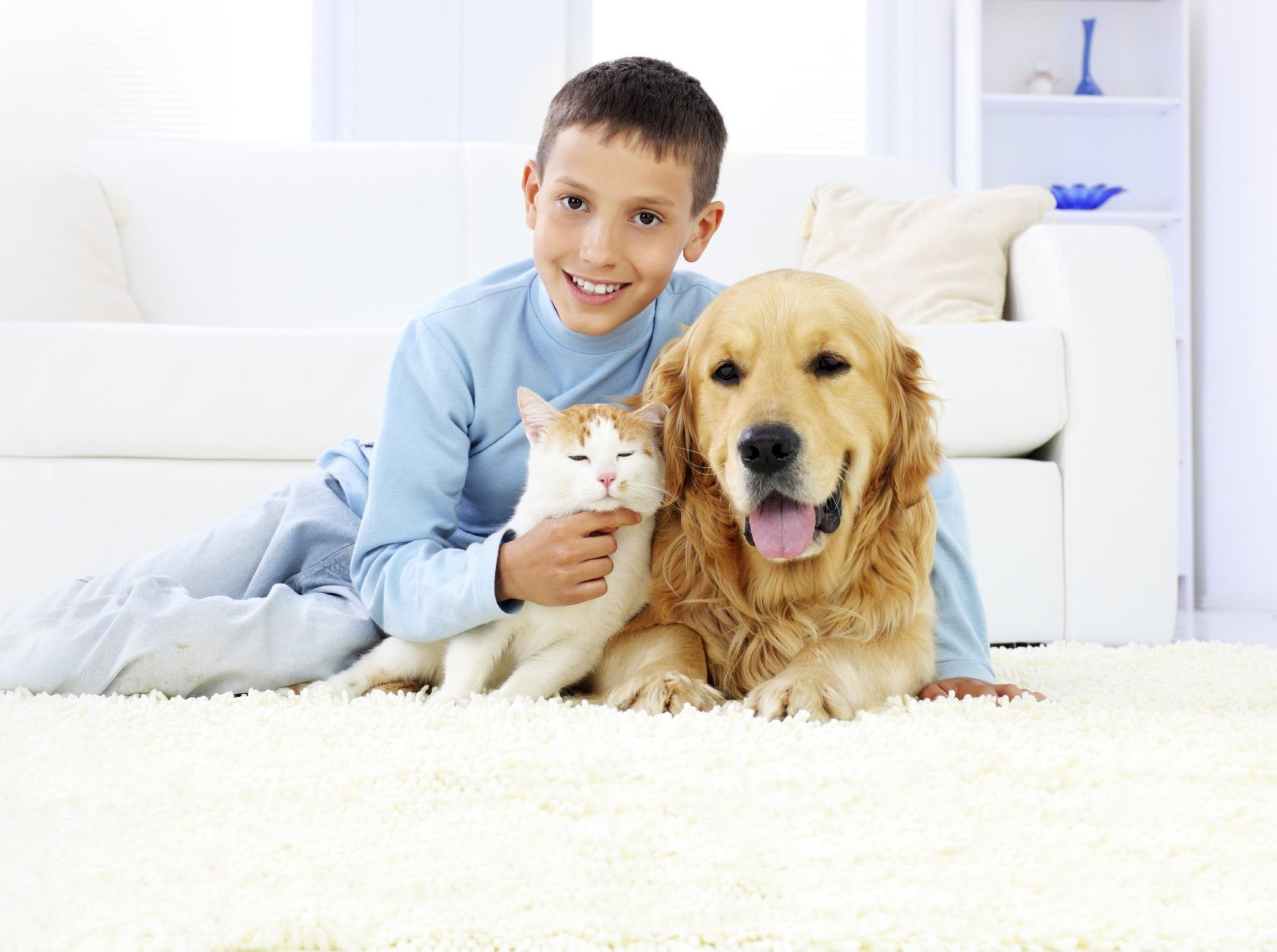 pet urine removal Annapolis md