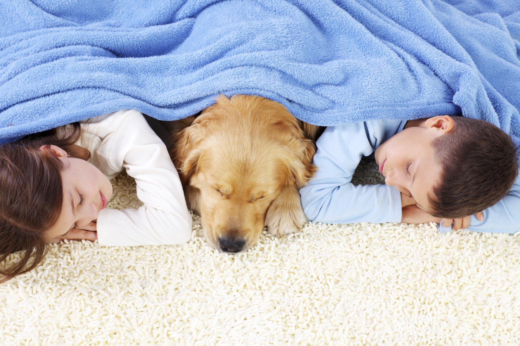 carpet cleaned by chem-dry's pet stain and odor removal in annapolis